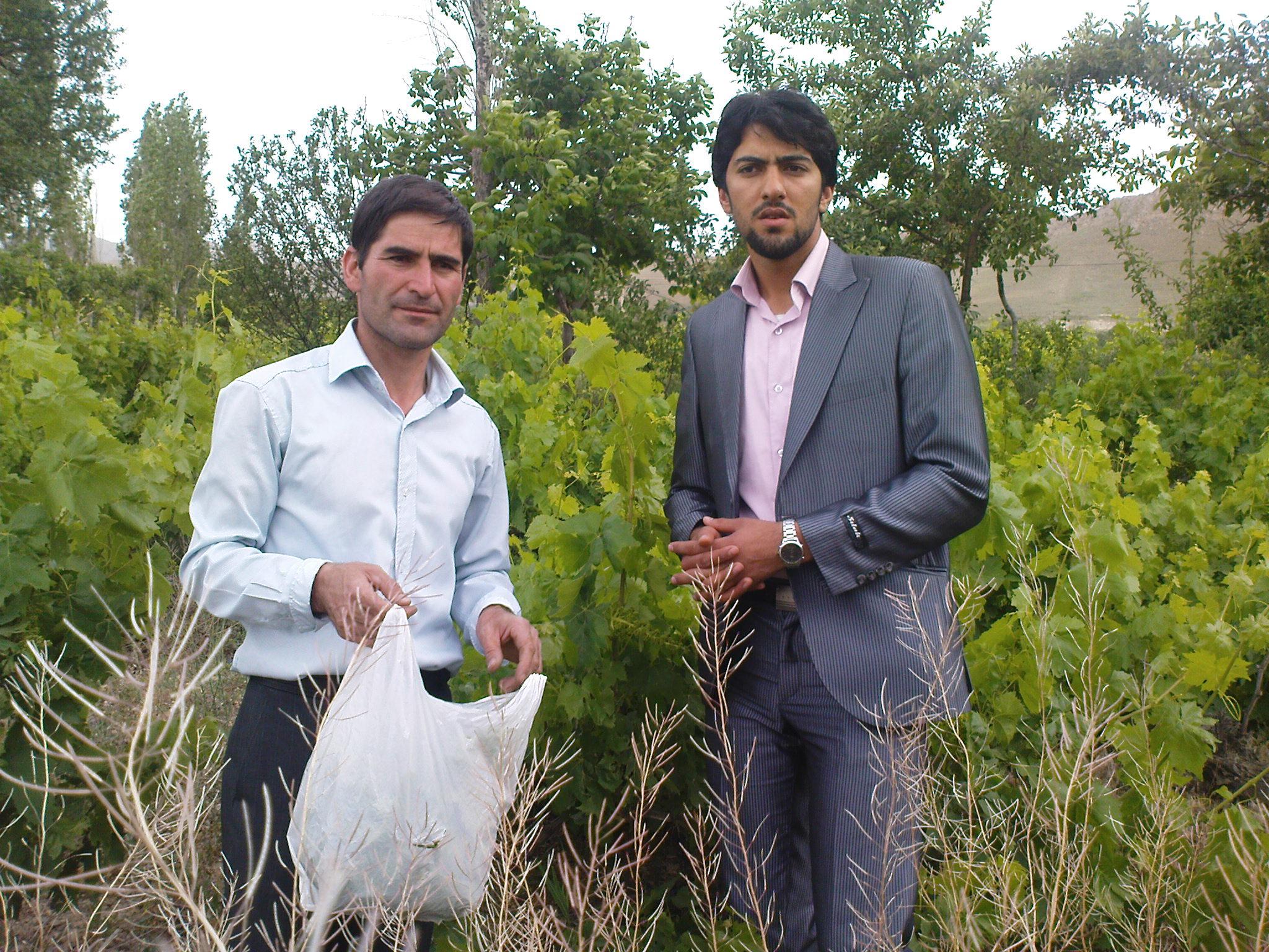 روستای حسن آباد سادات